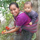 Woman and baby with greenhouse tomato crop.
