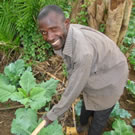 Man hoeing a vegetable garden in Kenya.