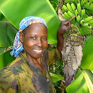 Woman with bannana crop in Kenya.
